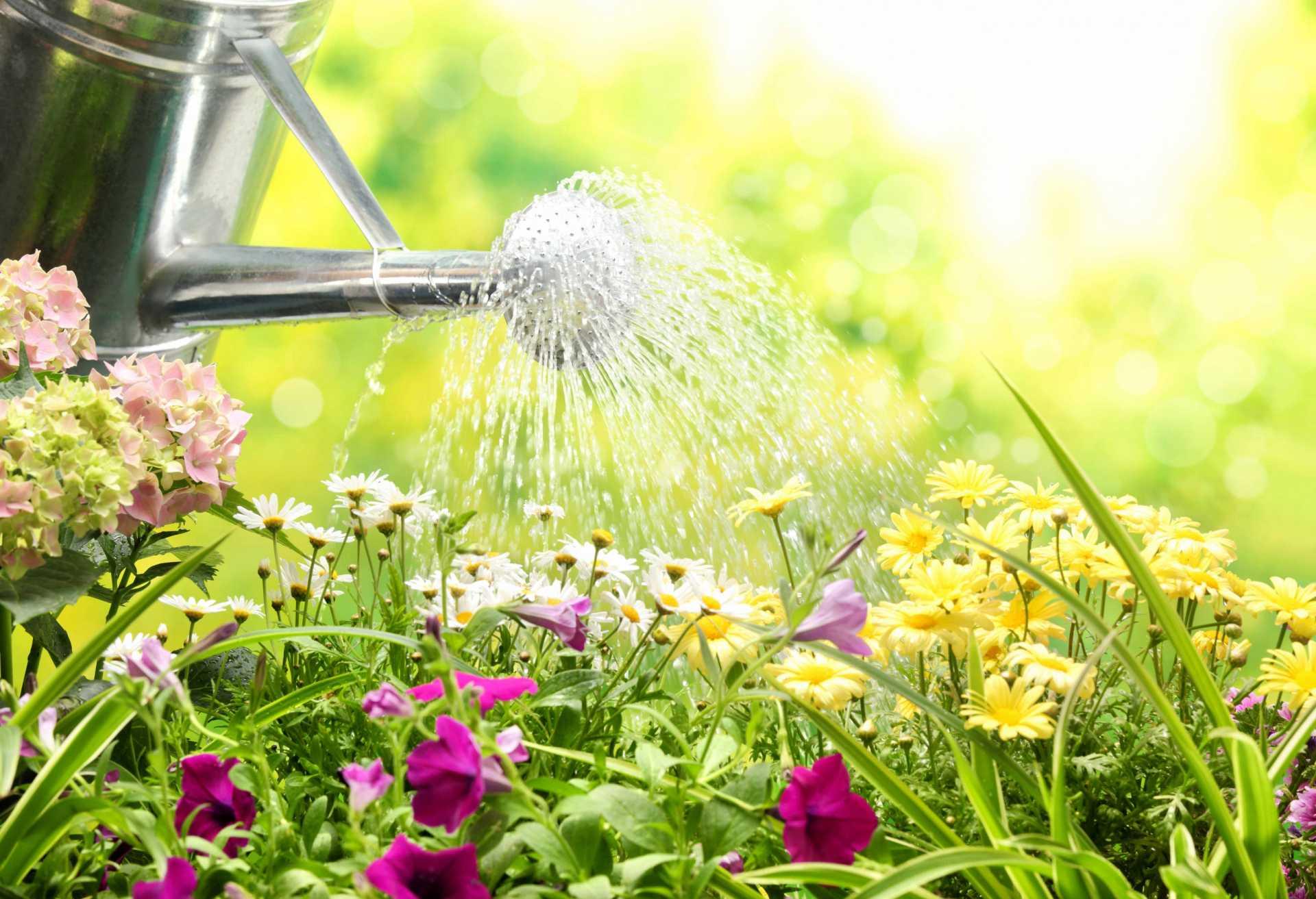 10 Tipps für eine optimale Gartenbewässerung