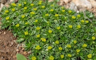 9 Bodendecker, die schnellwachsend und anspruchslos perfekt in Ihren Garten passen!