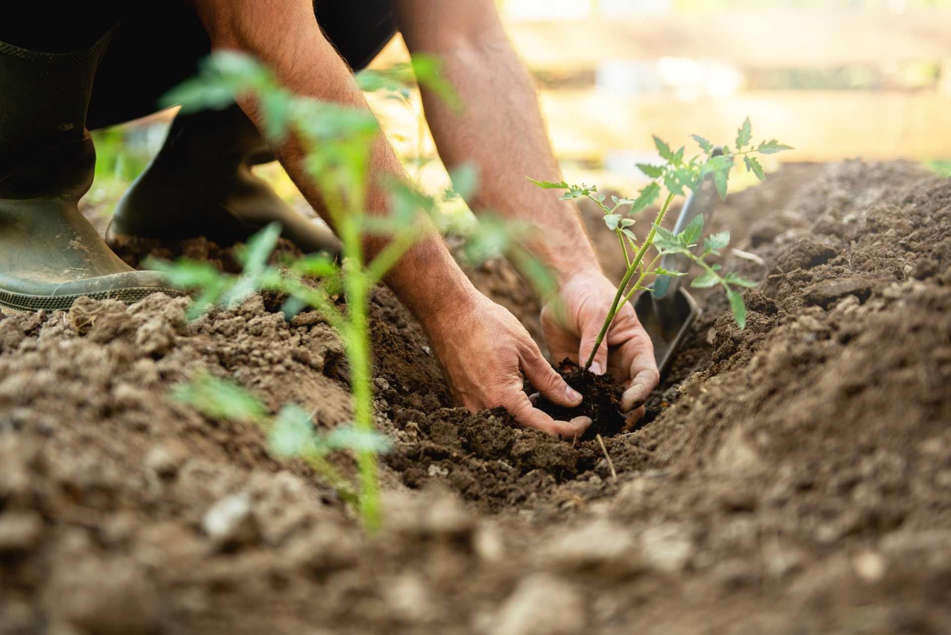 8 Fehler bei der Anzucht von Pflanzen, die das Wachstum mindern