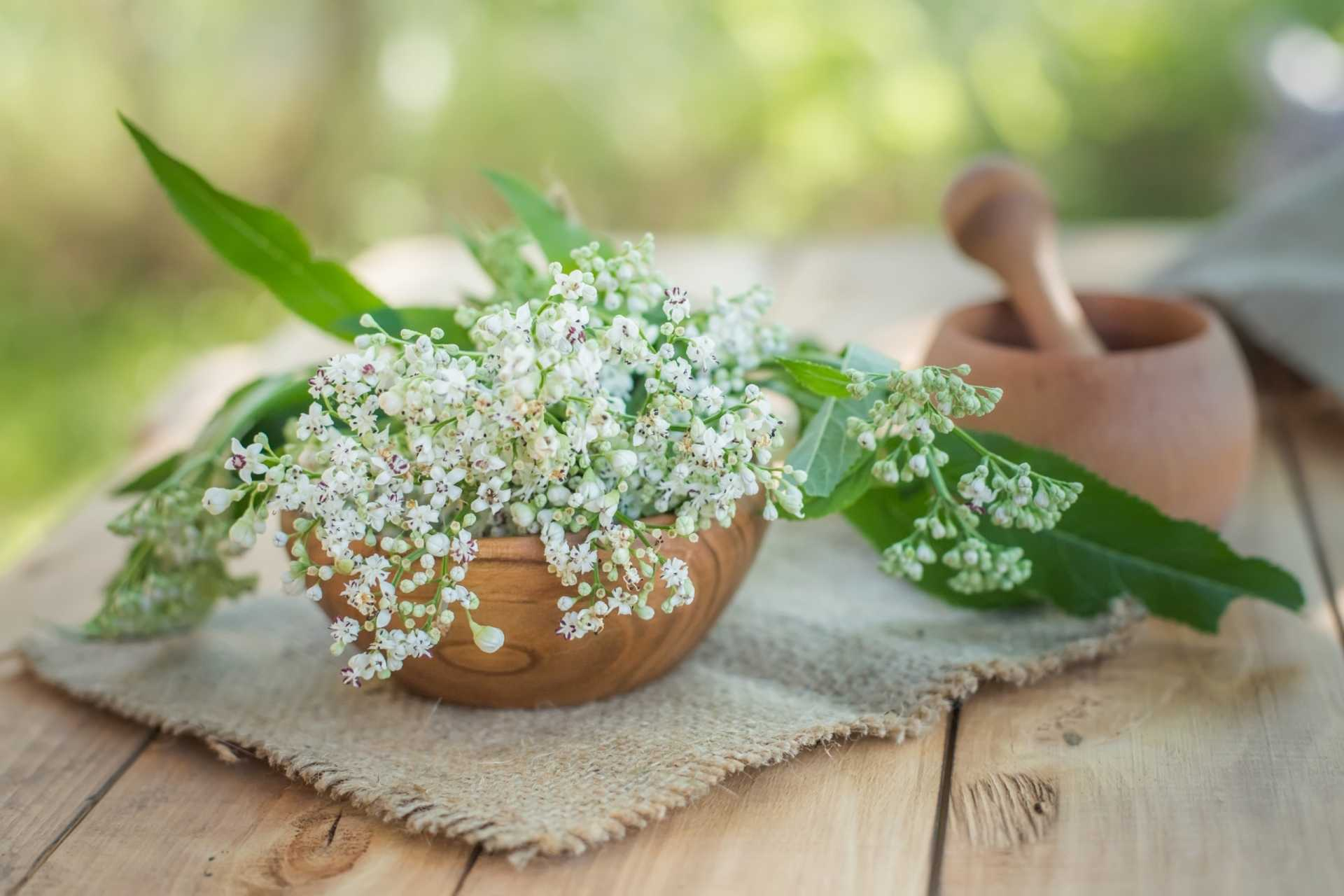 12 Kräuter gegen Stress, die garantiert entspannen