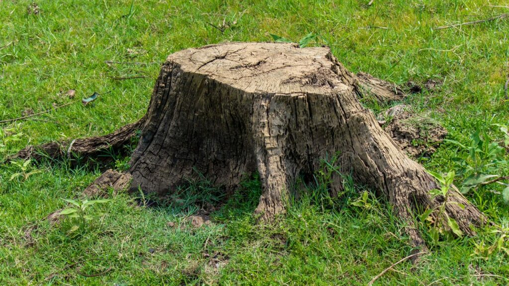 Baumstumpf entfernen