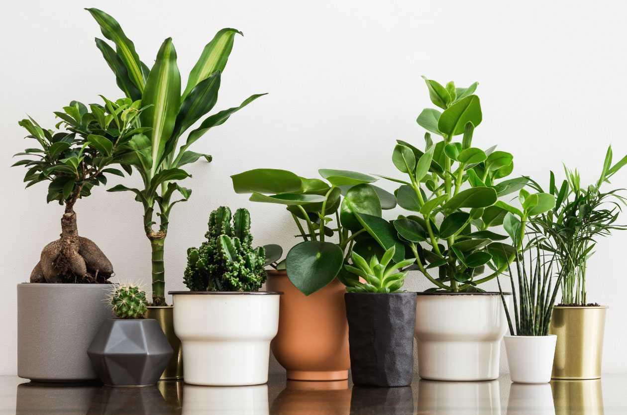 18 effektive luftreinigende Zimmerpflanzen für ein frisches Raumklima