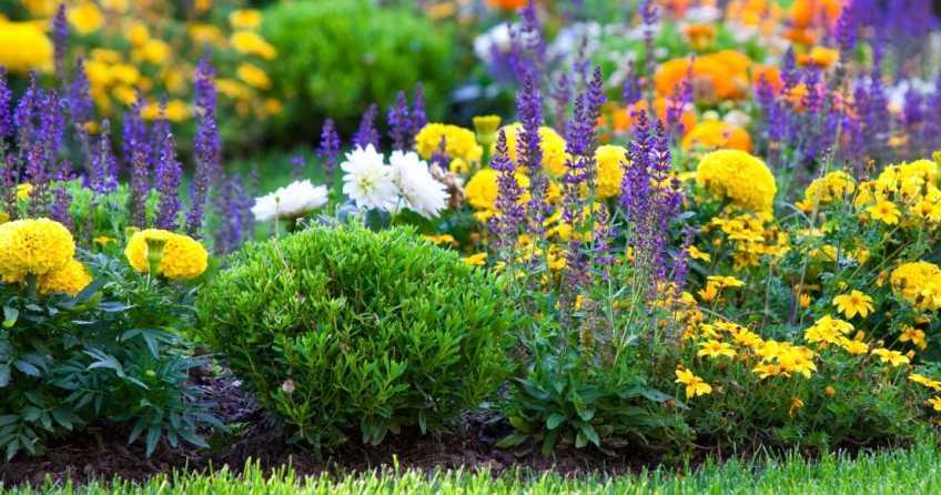 Großes Beet mit vielen bunten Blumen Arten.