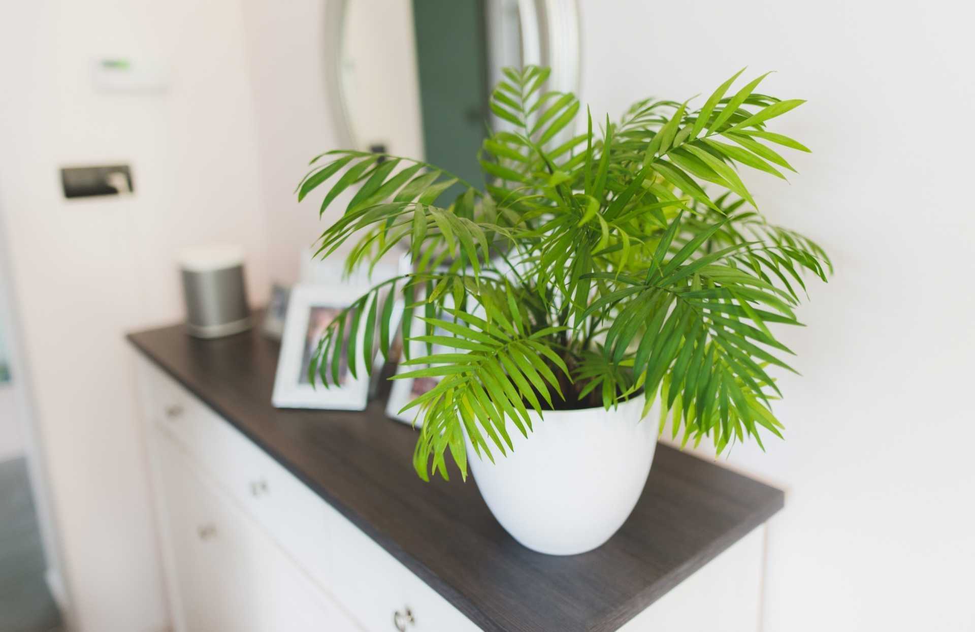 17 allergikerfreundliche Zimmerpflanzen für eine saubere Luft