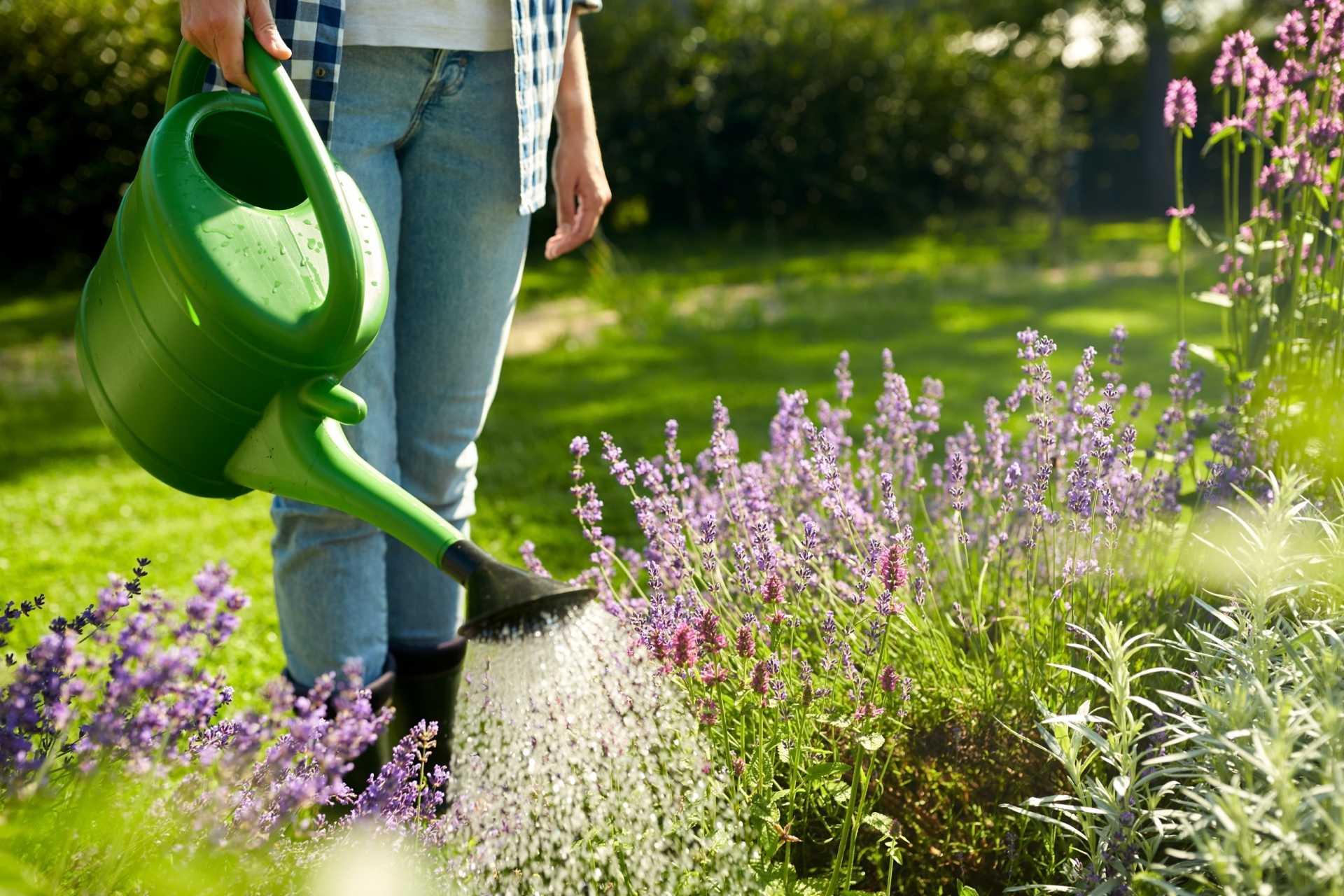 12 Fehler bei der Gartenbewässerung und wie Sie diese vermeiden können