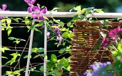 10 beliebte Kletterpflanzen für den Balkon