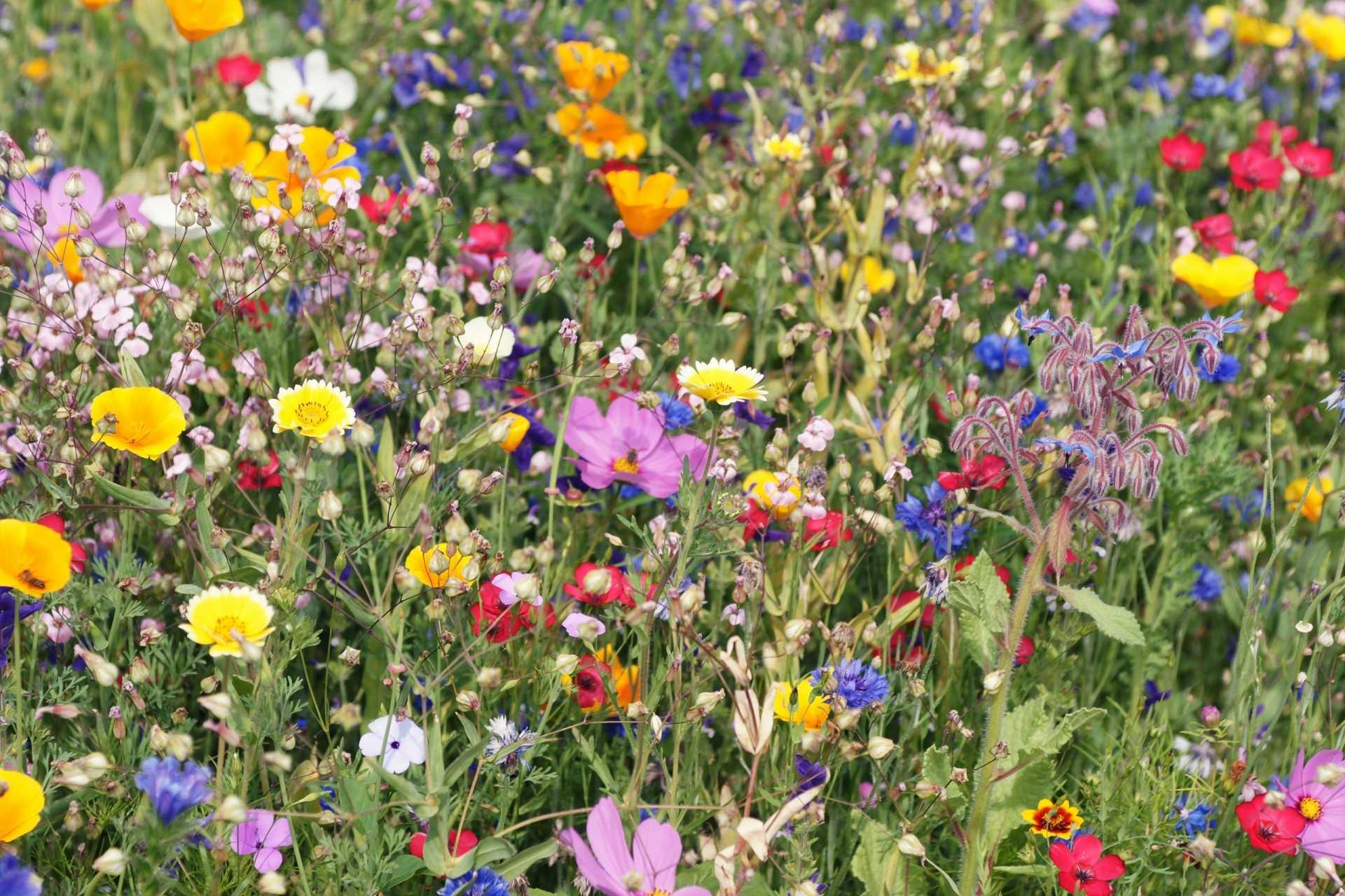 10 Tipps für einen bienenfreundlichen Garten