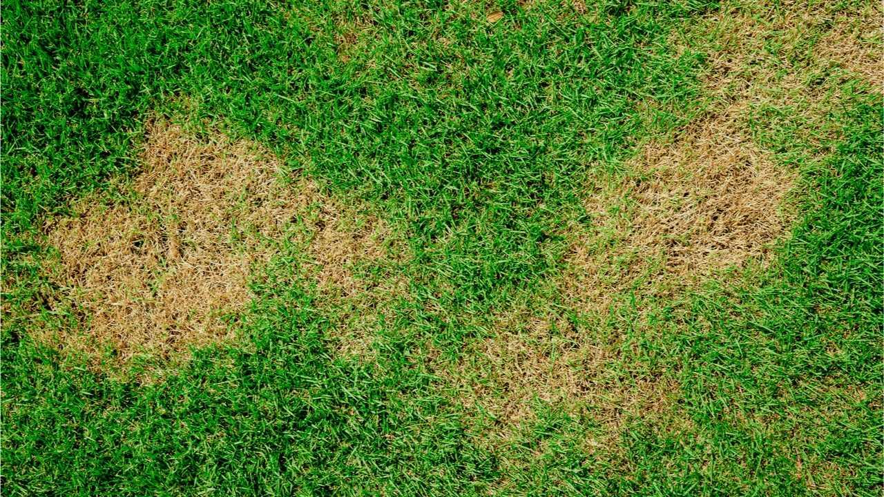 Braune Flecken im Rasen: Ursachen für diese Flecken
