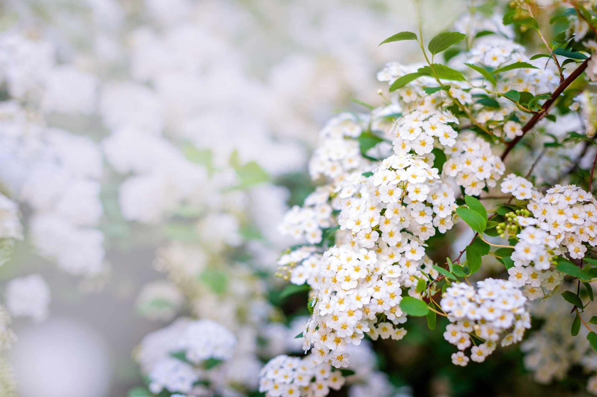 25 Kübelpflanzen, die winterhart sind und es sonnig mögen