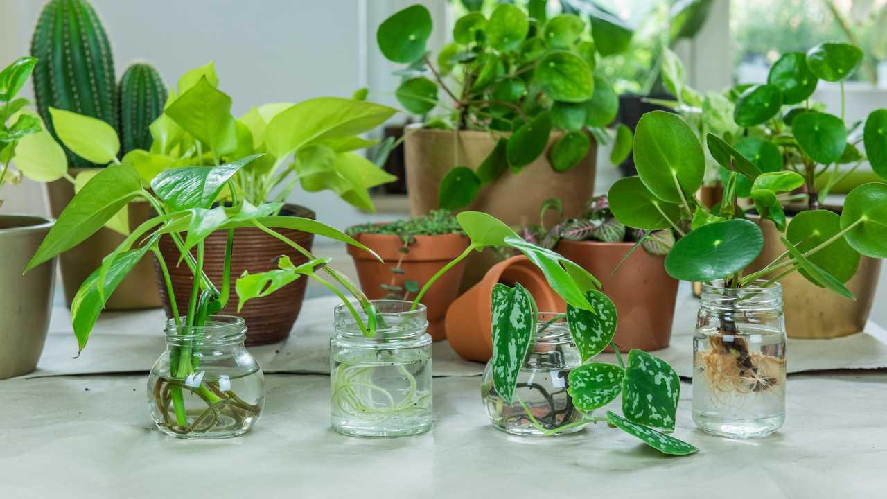 Pflanzenvermehrung – Anleitung für Anfänger