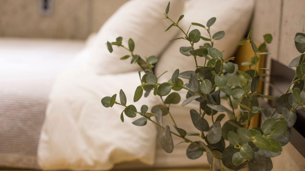 Der Eucalyptus stammt unter anderem aus Australien. Dies beantwortet bereits die meisten Fragen zum Standort und Wasserbedürfnis.
