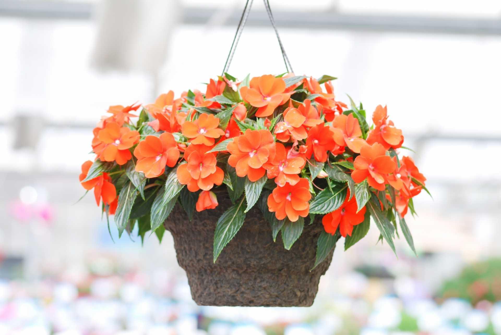 19 Blumen für Blumenampeln, die Außenbereiche verschönern