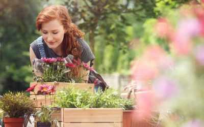 Der Garten im Juli: Was jetzt zu tun ist