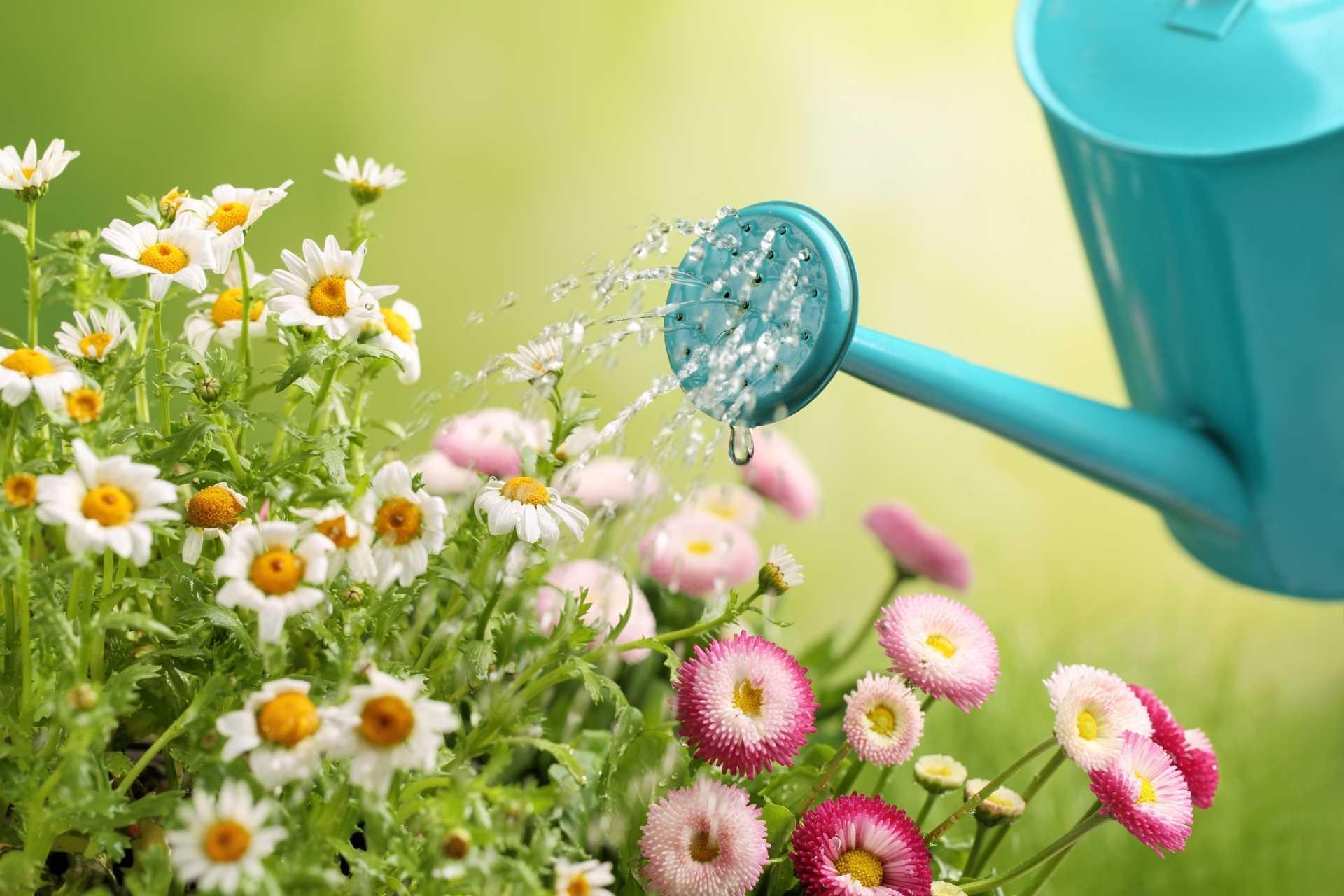 Pflanzen morgens oder abends gießen: Wann ist der perfekte Zeitpunkt?
