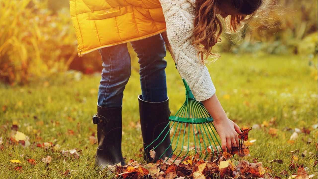 Der Garten im November – Das ist jetzt noch wichtig!