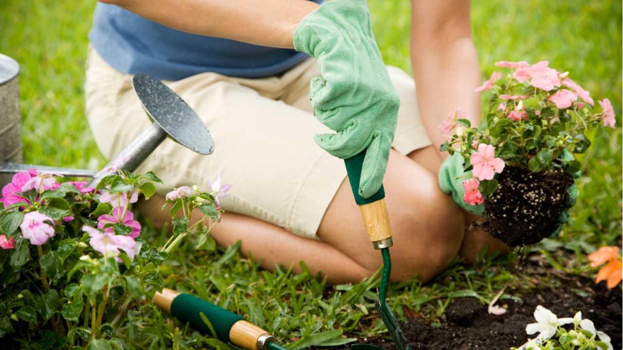 Der Garten im August: Was jetzt zu tun ist!