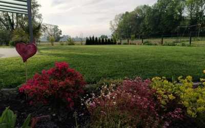 Gartenbewässerung: Selber gießen oder gießen lassen?