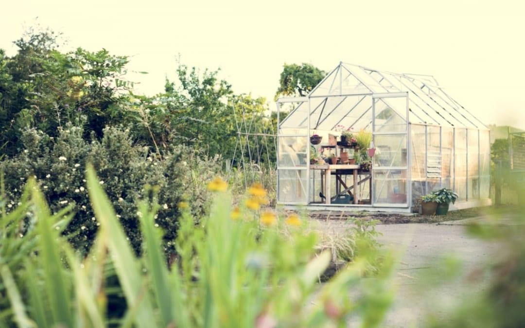 Gewächshaus selber bauen – So einfach geht's