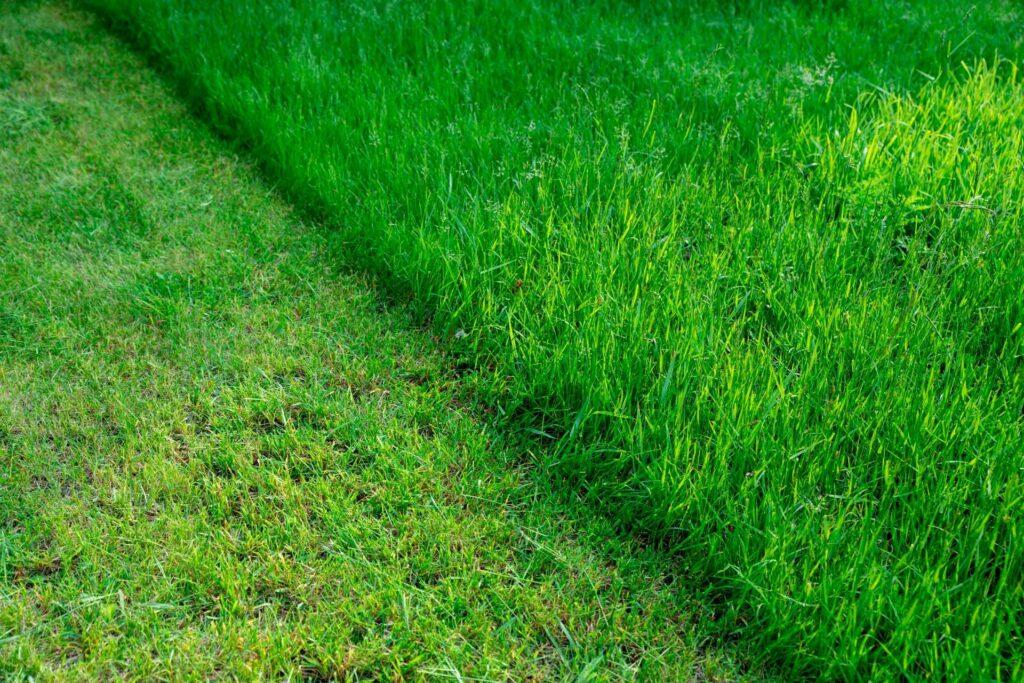 Gemähter vs. nicht gemähter Rasen