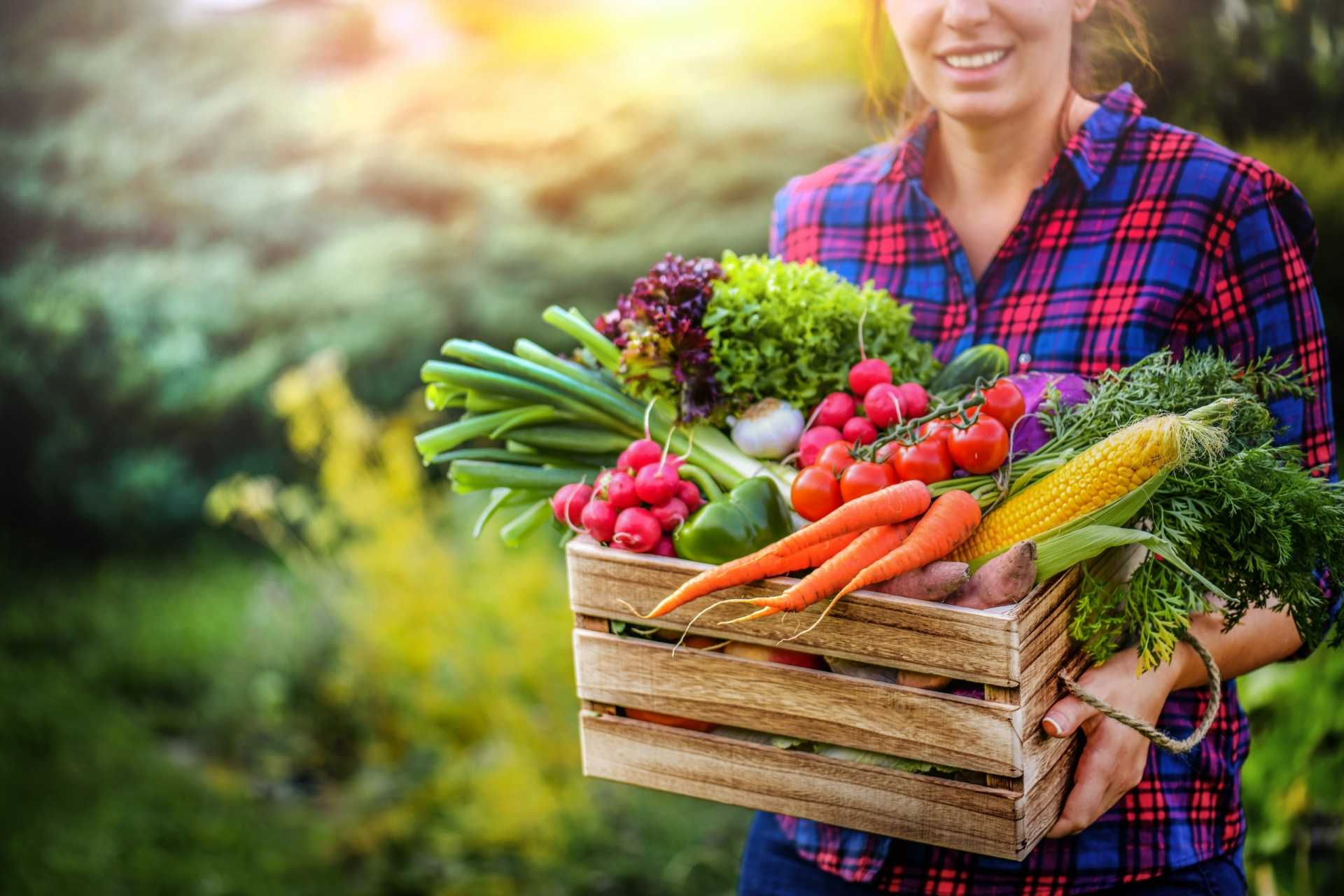 Die 11 häufigsten Fehler beim Gemüseanbau