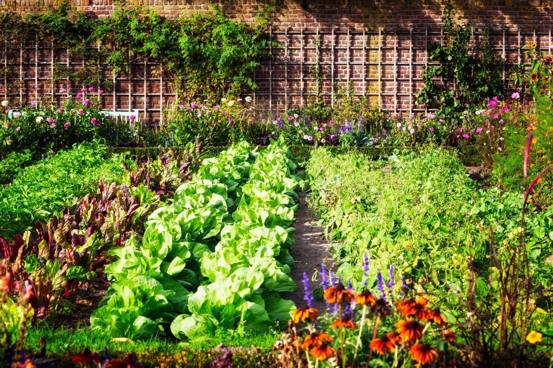 Gemüse im Herbst pflanzen: 10 Sorten auf einen Blick