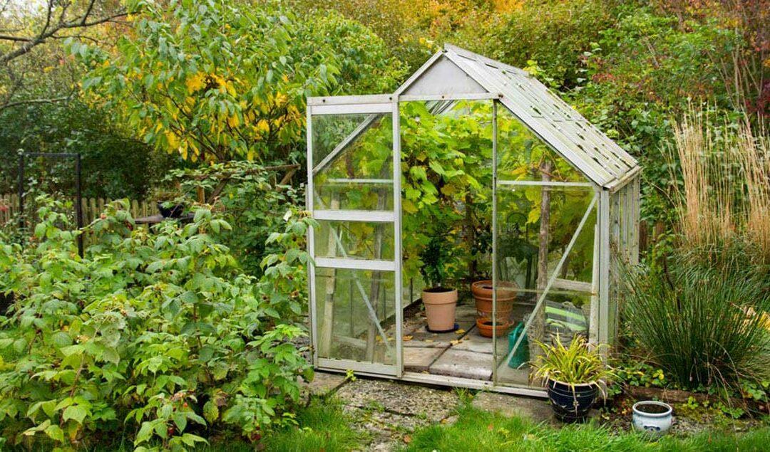 Gewächshaus Klein – Ratgeber Gewächshäuser für Garten, Terrasse und Balkon