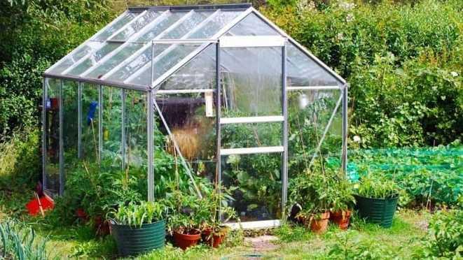 Pflanzenpflege – die richtige Luftfeuchtigkeit im Gewächshaus