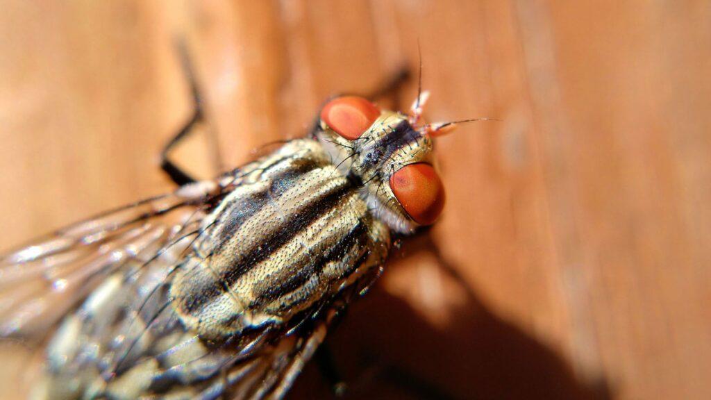 lavendel gegen fliegen