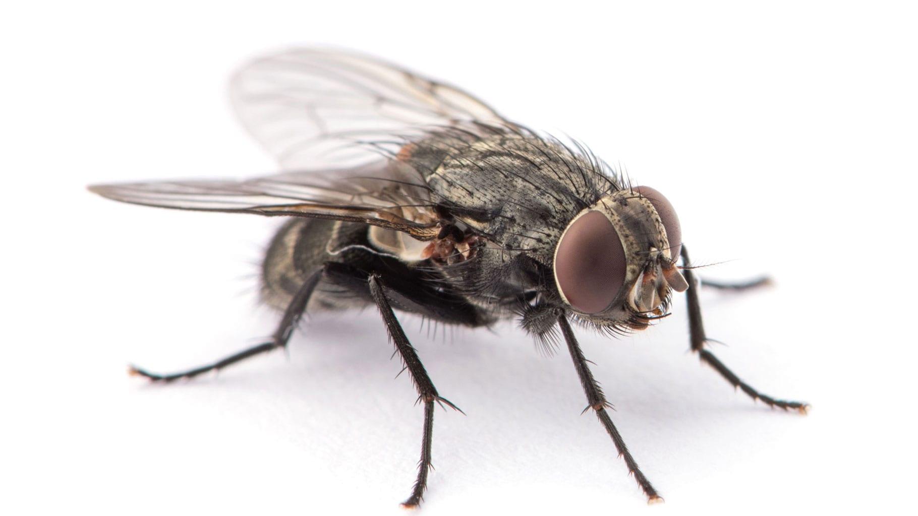 was sind hilfreiche hausmittel gegen fliegen im haus