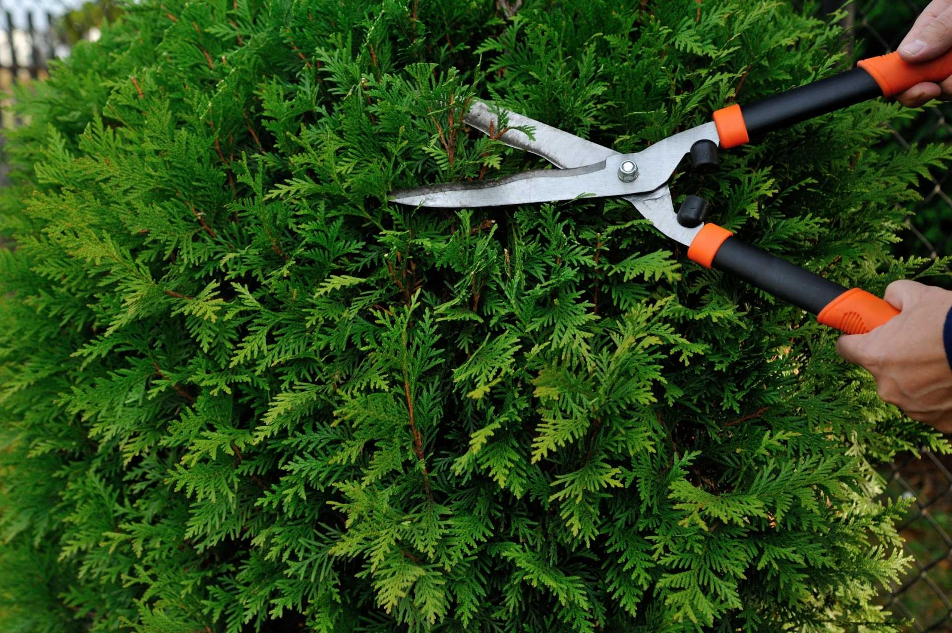 12 Fehler, die Sie beim Hecke schneiden vermeiden sollten