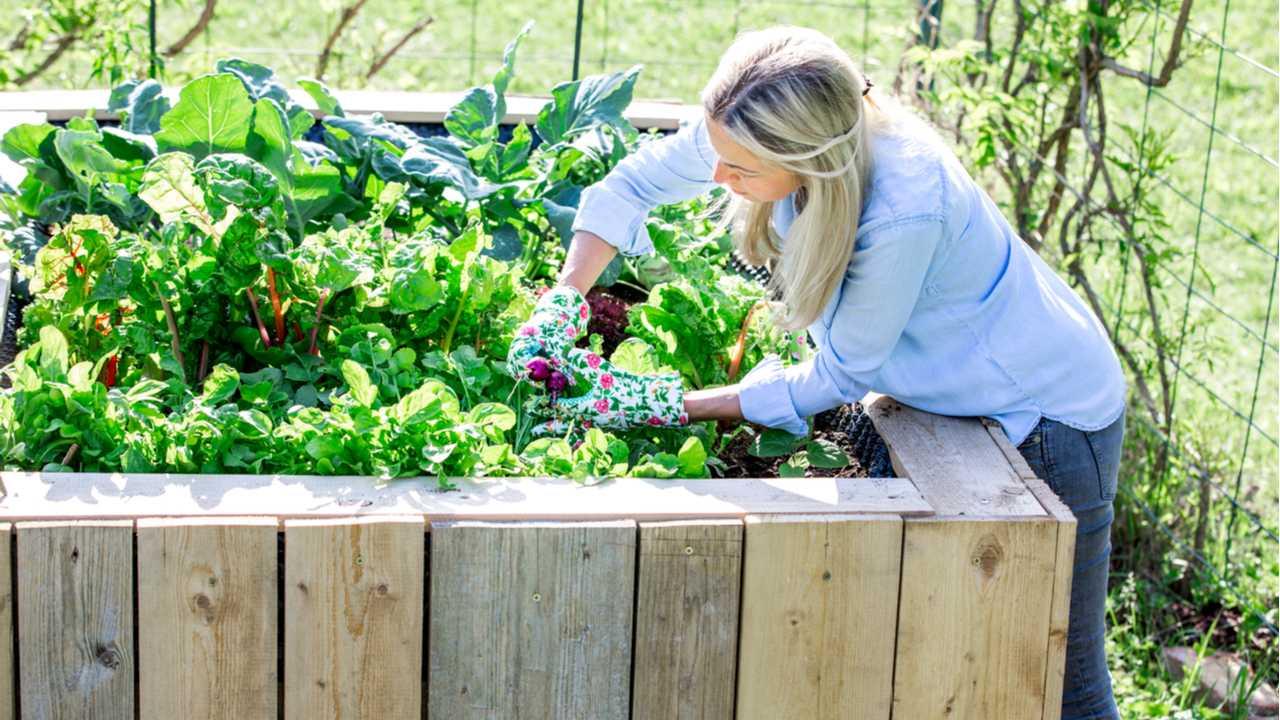 Top 21 Gemüsesorten für den Anbau im Hochbeet