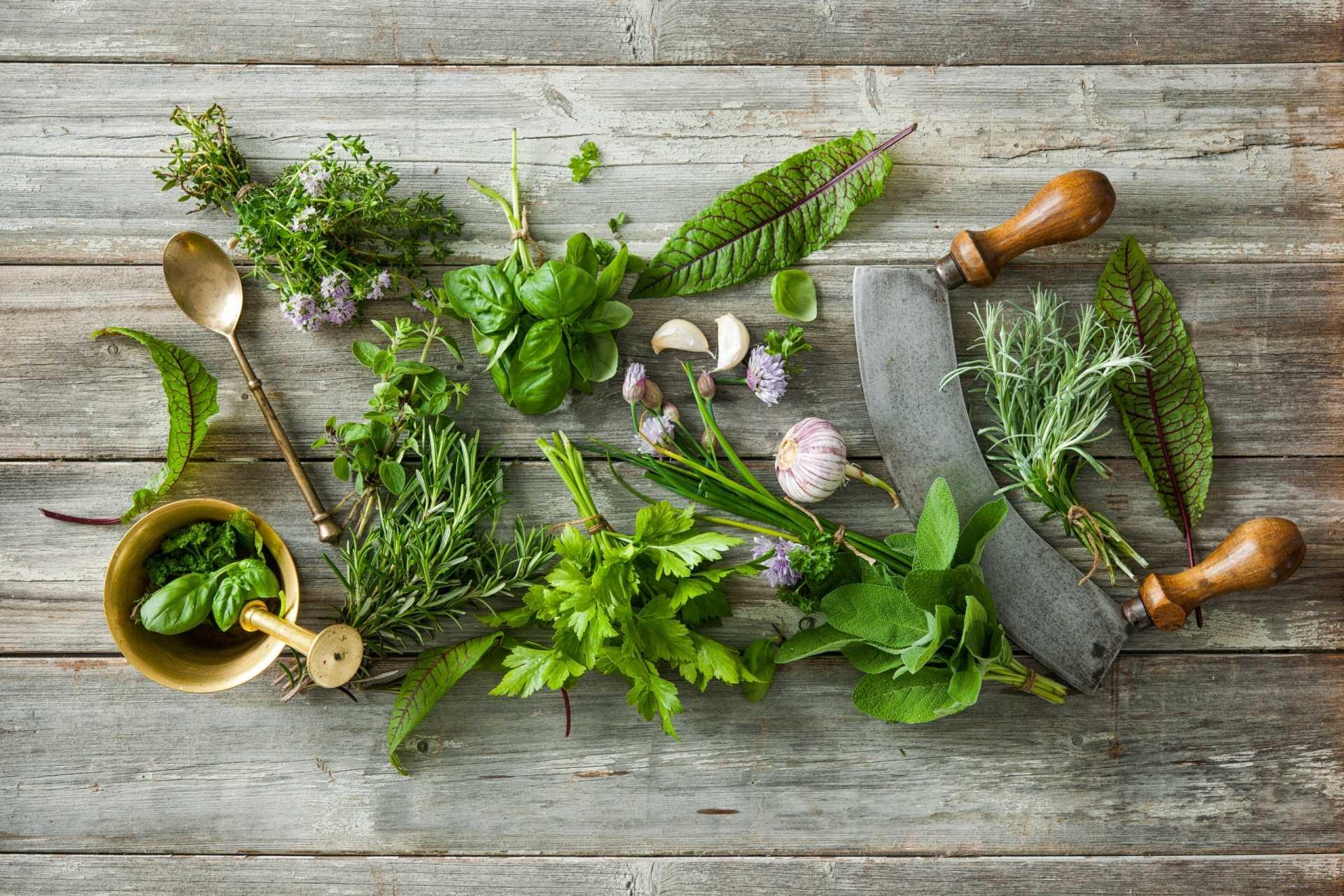 10 Fehler beim Küchenkräuter ziehen, die Sie verhindern sollten
