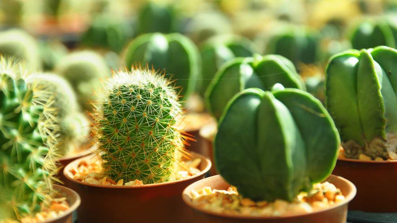 Kaktus vermehren – So gelingt es Ihnen!
