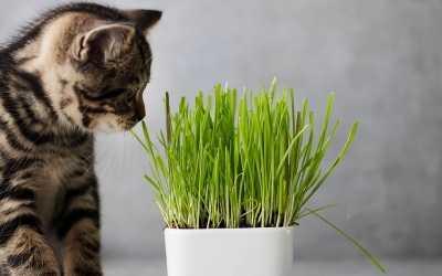 13 ungiftige Zimmerpflanzen für Katzen!