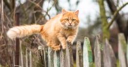 Katzen vertreiben aus dem Garten