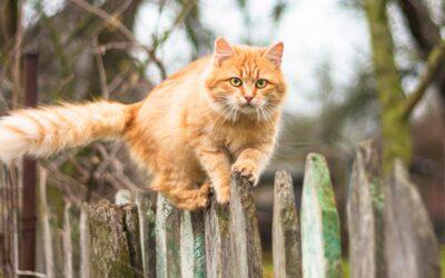 Katzen vertreiben und aus dem Garten fernhalten: 11 effektive Schritte