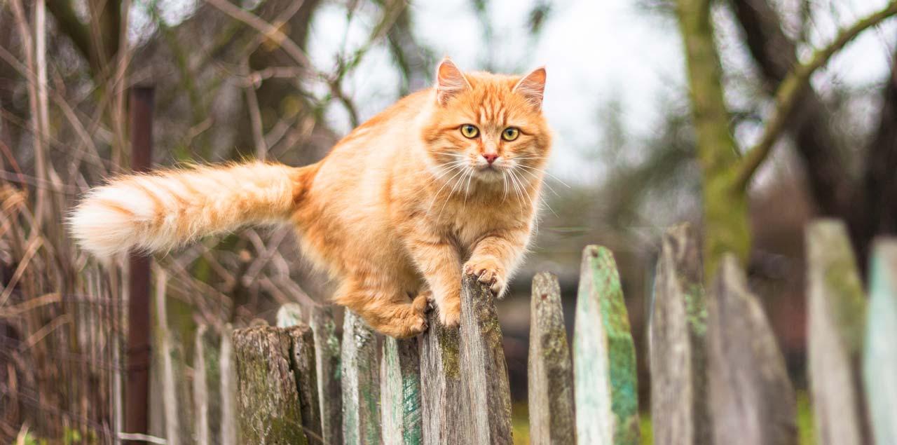 katzen vertreiben und aus dem garten fernhalten