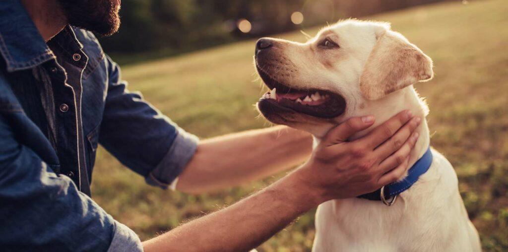 Kieselgur zur Behandlung von Hunden