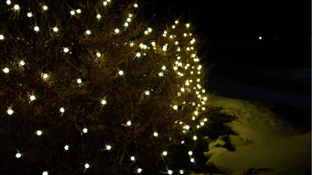 Lichternetze mit integrierter Timerfunktion sind ideal für die Abendstunden.