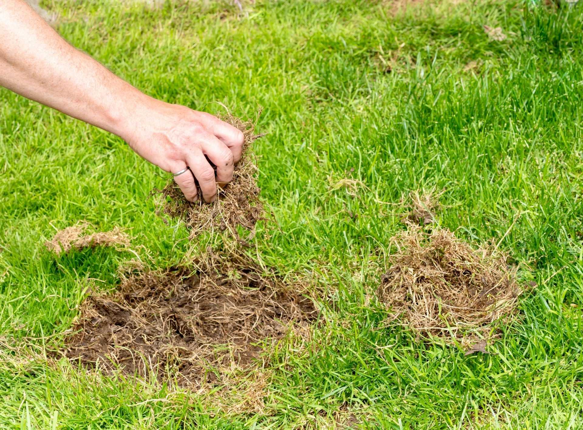 Löcher im Rasen – Ursachen und wie diese vermieden werden können