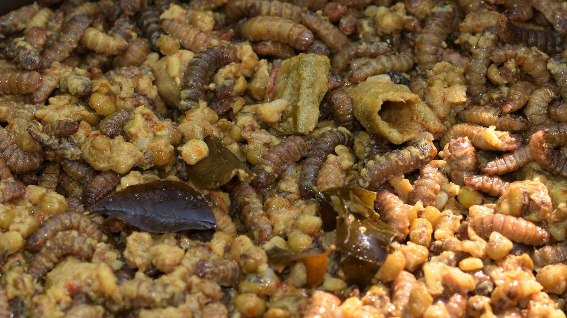 Würmer braune Schnecken, Nacktschnecken
