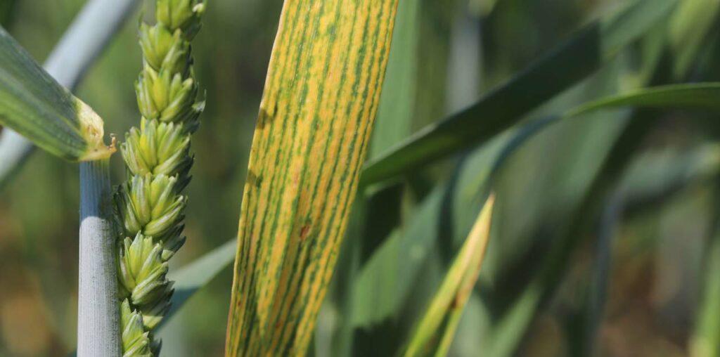 Magnesiummangel bei Pflanzen erkennen