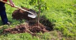 So pflanzen Sie einen Freundschaftsbaum