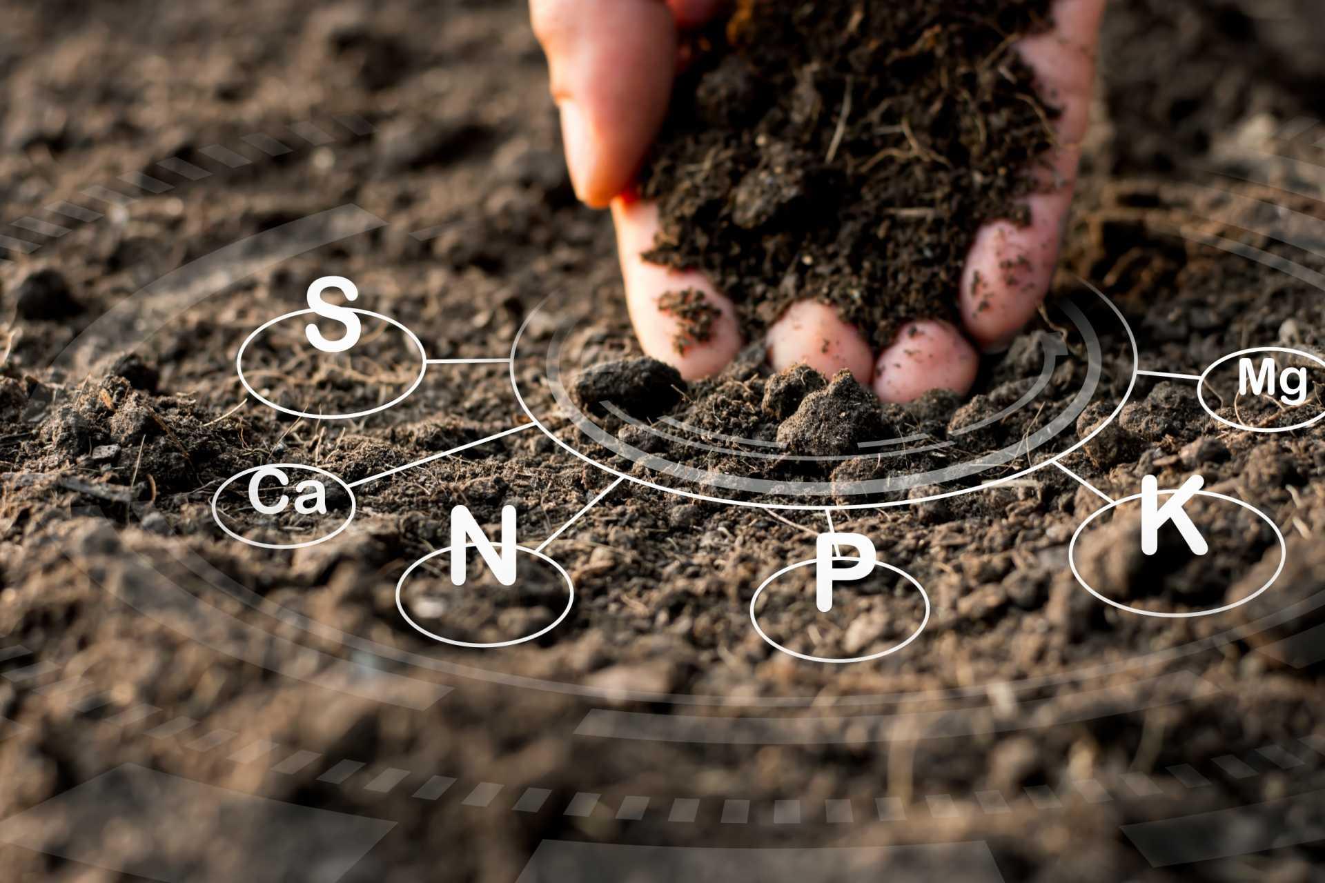 Schwefelpflanzen (MSM) richtig düngen