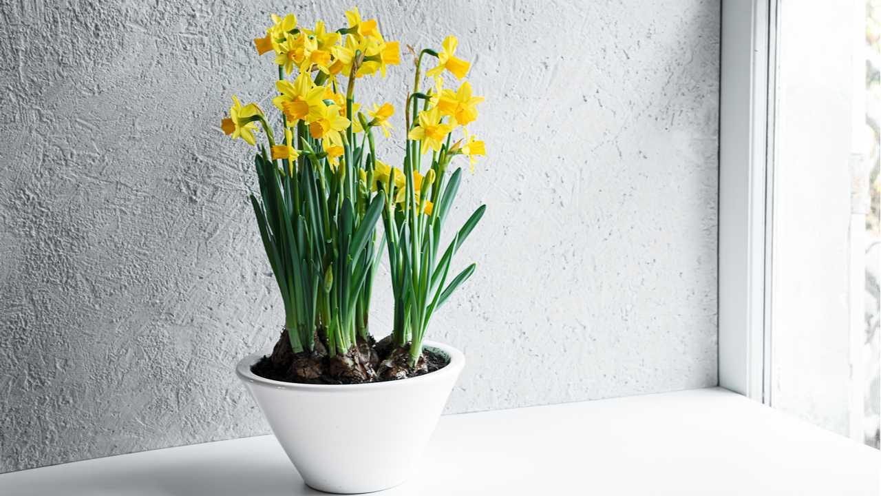 Blühende Zimmerpflanzen für Ihr Wohnzimmer: Die Top 12 der schönsten Pflanzen für Zuhause