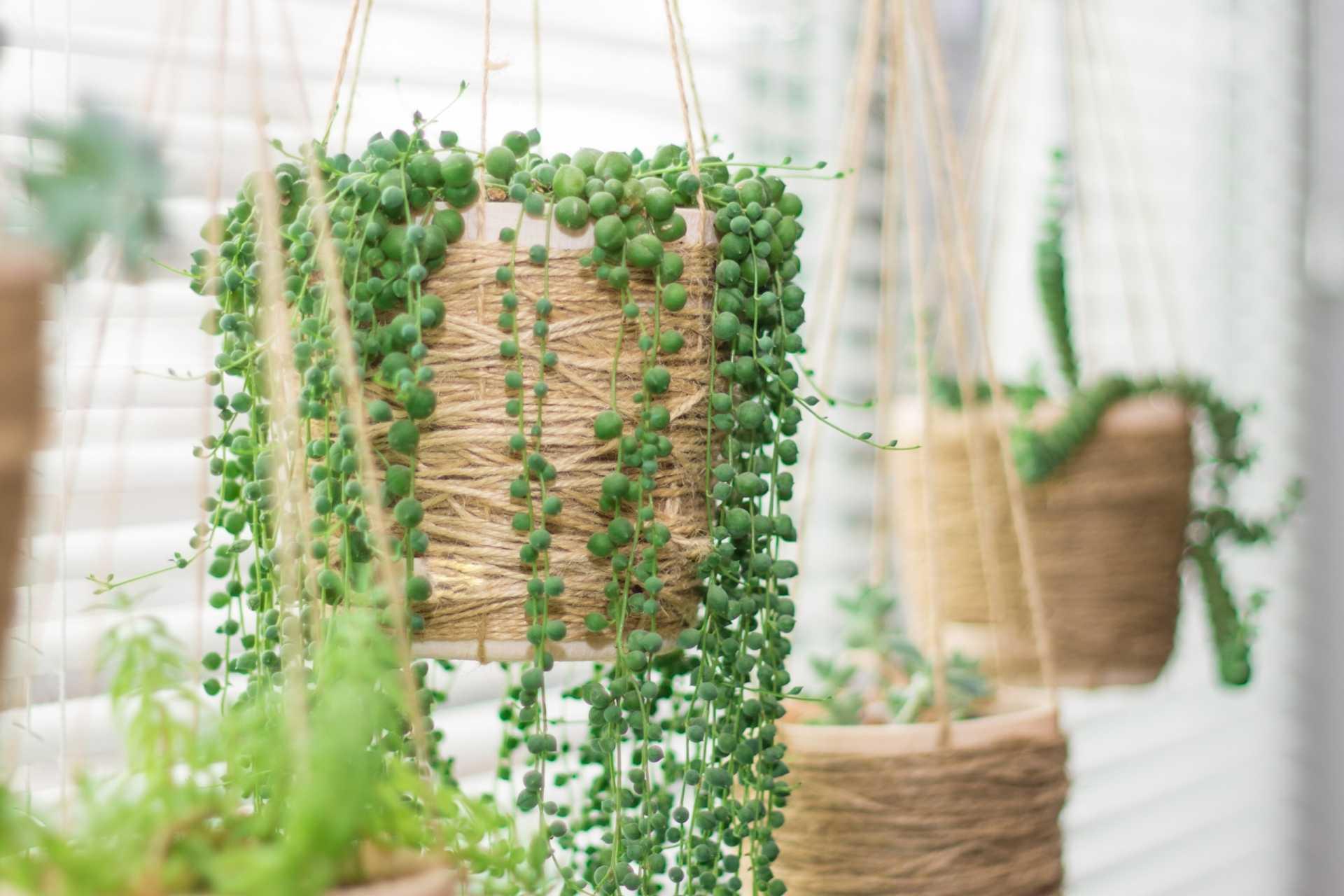 17 pflegeleichte Hängepflanzen für einen sorglosen Sommer