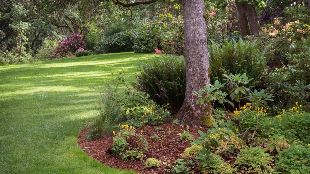 Welche Pflanzen eignen sich für Schatten? Wir zeigen die schönsten Blumen und Pflanzen und was Sie bei schattigen Standorten beachten müssen!