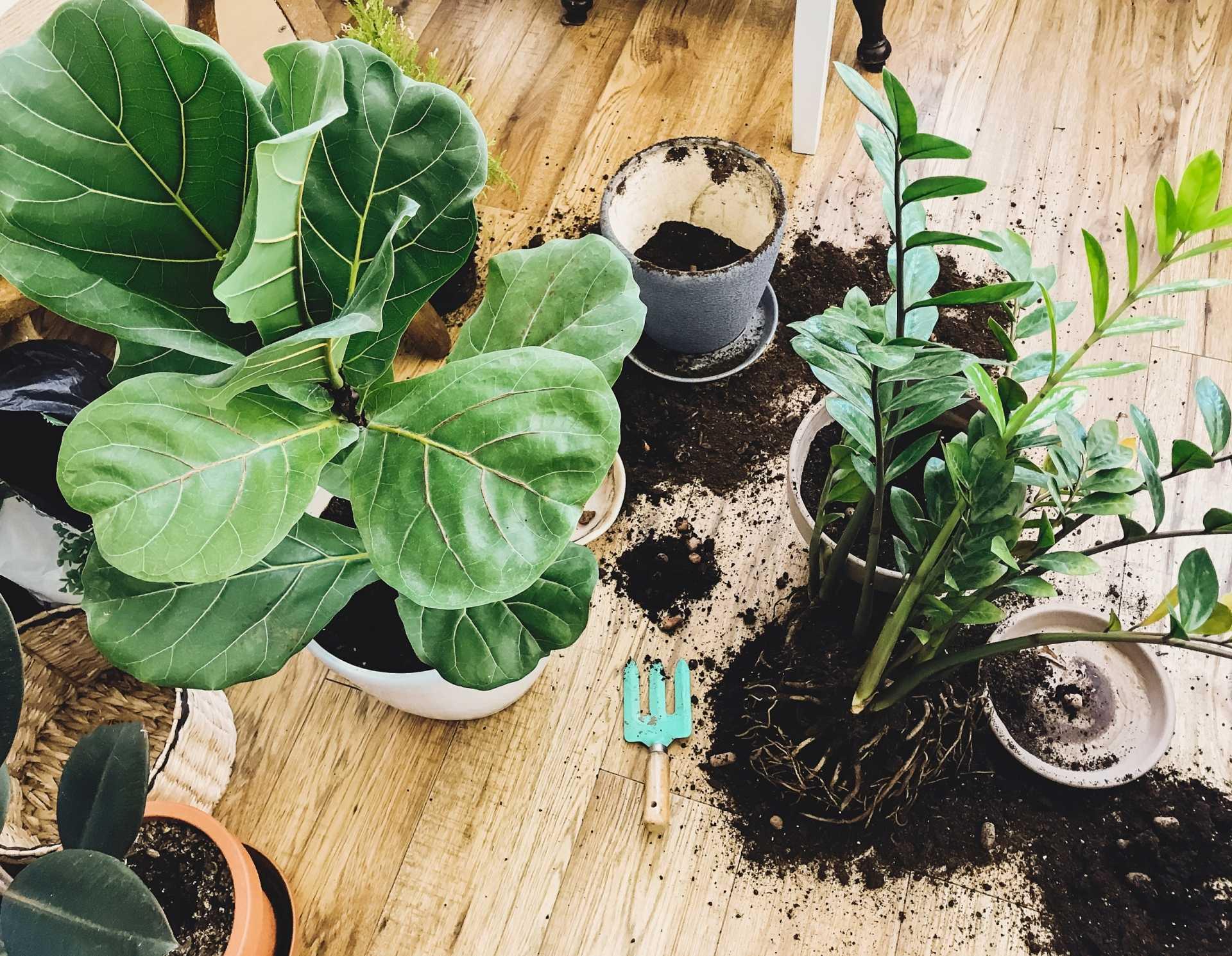 9 Fehler beim Umtopfen, die das Wachstum Ihrer Pflanzen behindern
