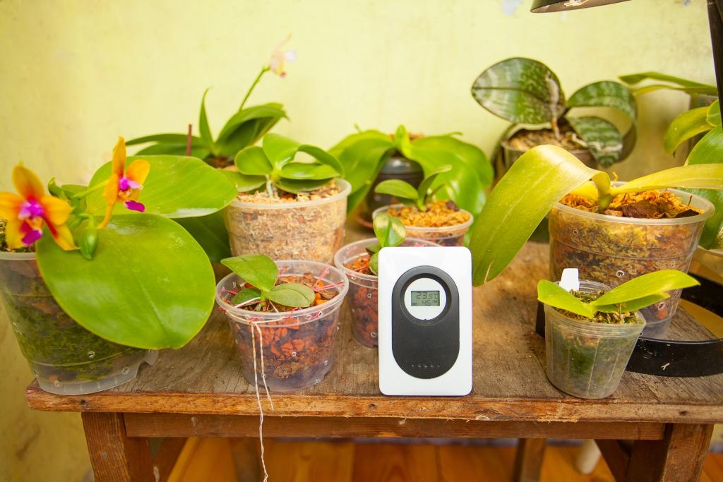 Ob eine Zimmerpflanze gegossen werden muss, kann durch einen Feuchtigkeitsmesser ermittelt werden.