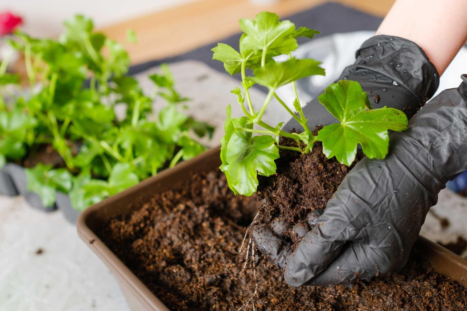 Welches Substrat eignet sich für welche Pflanze?